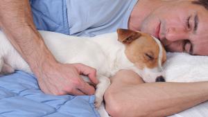 How The Brain Strengthens Memories During Sleep